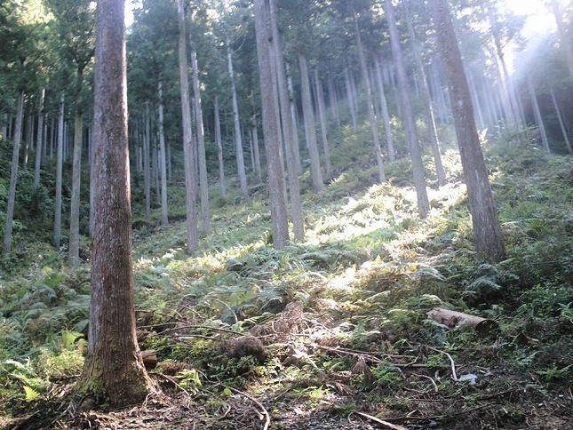 森のお墓「いのちの森」_10768