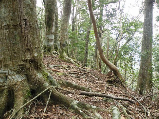 森のお墓「いのちの森」_10777
