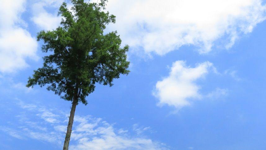 【樹木葬 シンボルツリー】アイキャッチ画像