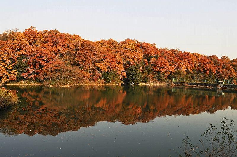 そよかぜ霊園の敷地内を彩る紅葉