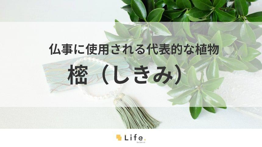 樒(しきみ)ってどんな植物?葬儀のときに使われる特別な植物について