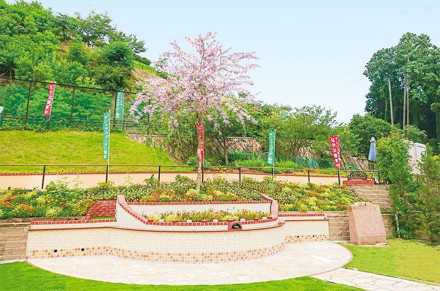 北摂池田メモリアルパーク「さくら陵墓」の四季折々の花