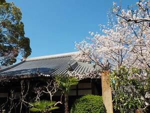 大寶寺 のうこつぼ_17239