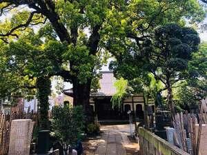 大雄寺 のうこつぼ_17374