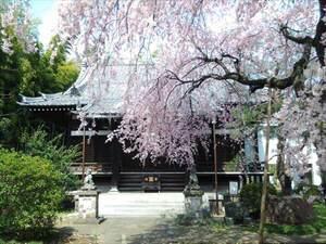 常徳山 玄照寺_18283
