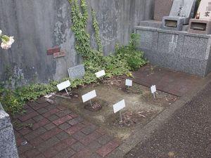 藤沢霊園_1830