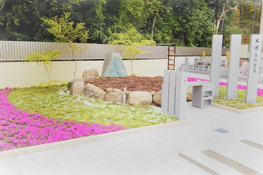 メモリーガーデン彩の杜霊園の芝桜に覆われた樹木葬墓(本源自然葬墓)