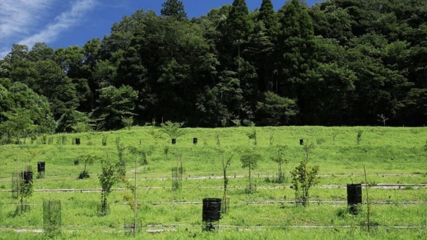 里山タイプ個別埋葬型の樹木葬