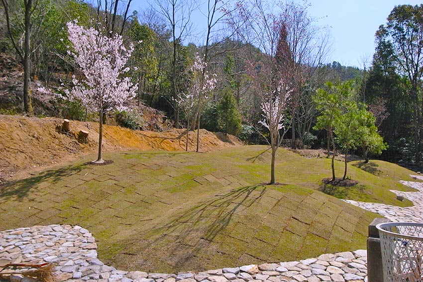 森の国墓苑 桜の樹木葬