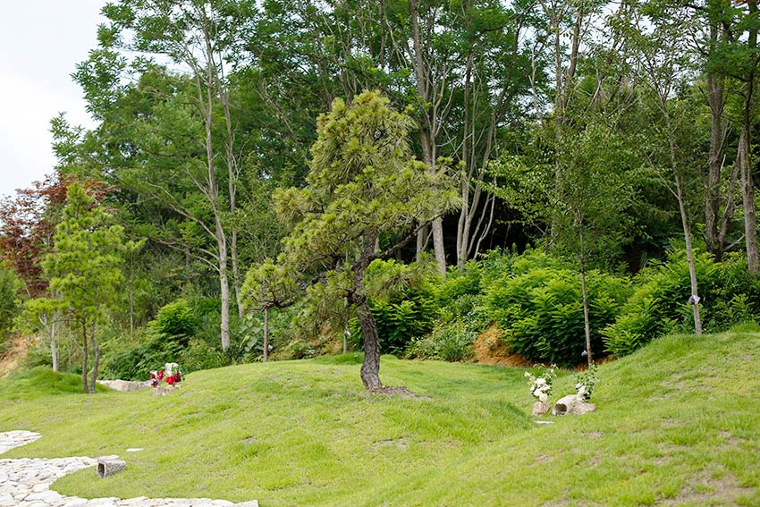森の国墓苑 松の樹木葬