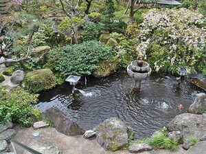 中庭にある鯉が泳ぐ池