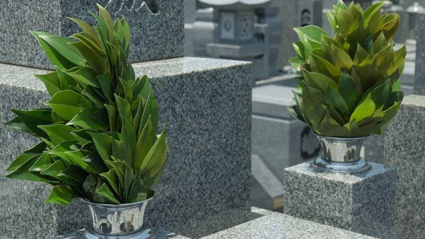神道のお墓について解説!仏教のお墓との違いや納骨までの流れがわかる