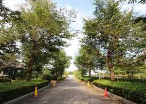 新所沢友愛聖地苑の並木道