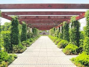 川越フォーシーズンメモリアル 花と緑のパーゴラ