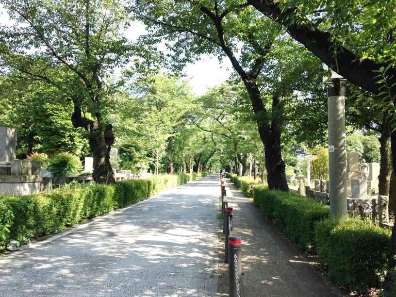 青山霊園9