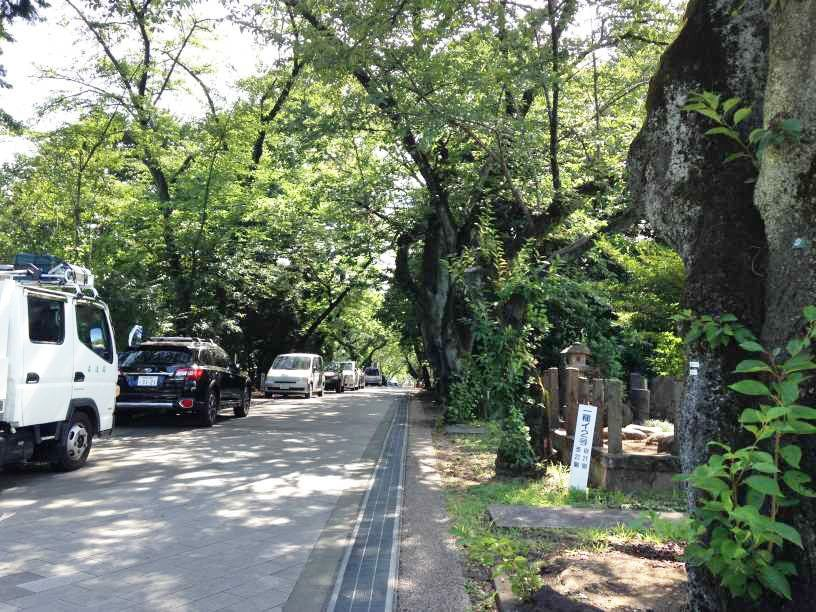 青山霊園15