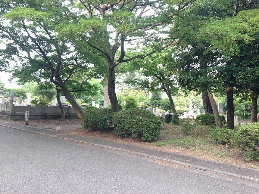 多磨霊園14