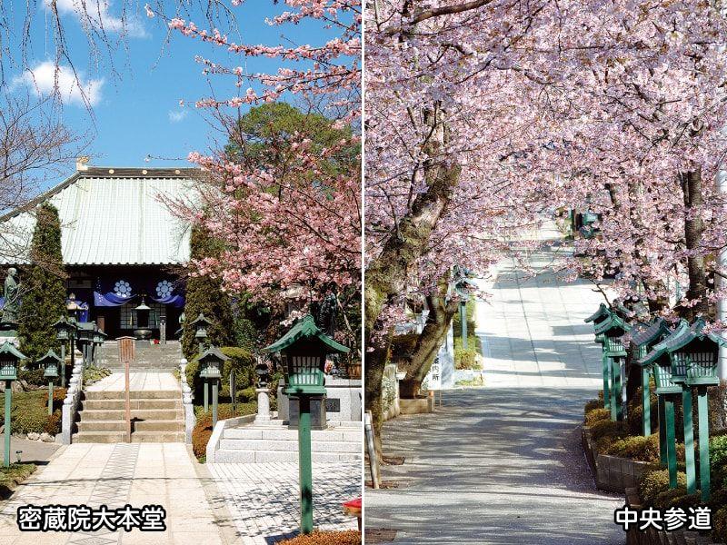 密蔵院の大本堂と中央参道