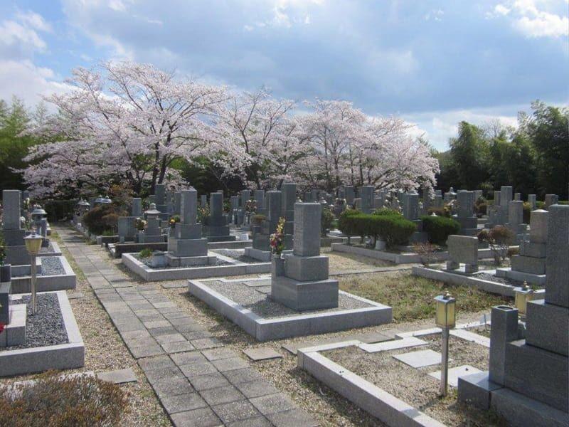 大阪枚方霊苑内に桜