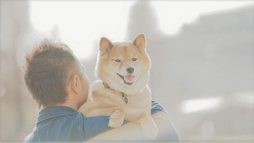 飼い主に抱かれて笑顔の柴犬