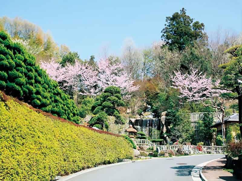 桜が咲いたメモリアルフォレスト多磨の坂道