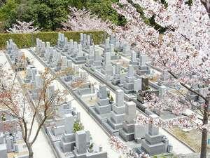 南大阪霊園の桜が綺麗な墓域