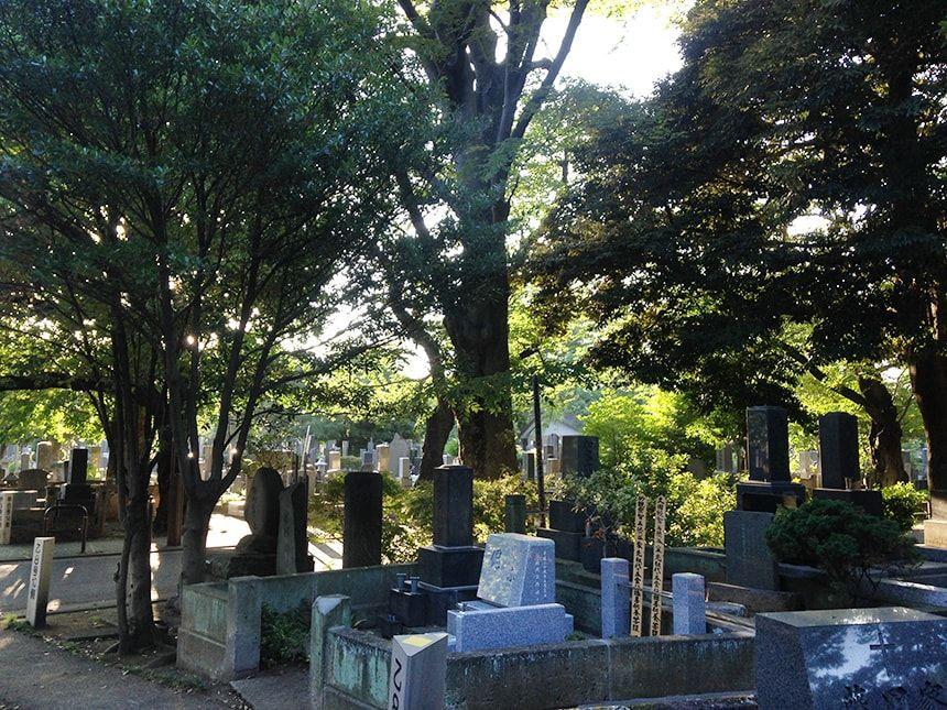 谷中霊園13
