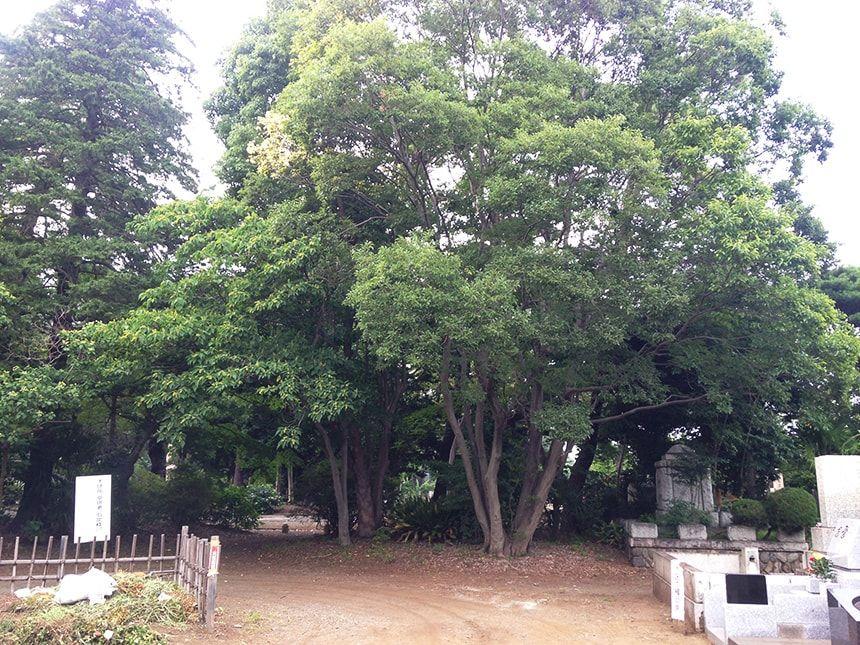 多磨霊園26